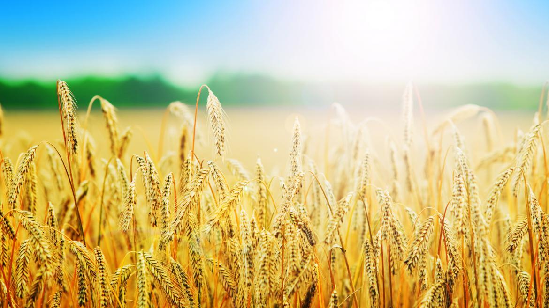 Water-Energy-Food security Nexus